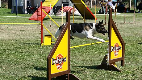 Agility-Turnier in Fürstenberg/Oder, Photo: H. Wollermann