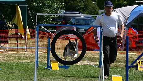Agility Turnier beim HSV Plänterwald, Photo: H. Wollermann