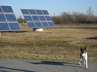 Solar-Demonstrationsanlage (mit Hund)