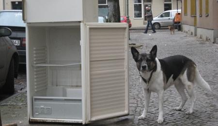 Amerikanischer Kühlschrank Wiki : Denn die zeit wird bald ganz ander sein [der