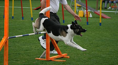 Agility-Turnier in Dresden-Schönstedt, Photo: Annett Stange