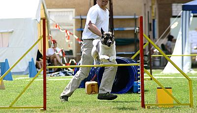 Agility-Turnier in Fürstenberg (Oder) am 25./26. Juni 2005 (Photo: H. Wollermann)