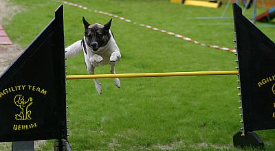 Zebu auf dem Tempelhofer Agility-Turnier am 3./4. September 2005, Photo: H. Wollermann