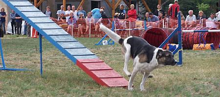Agility-Turnier in Lübbenau, 16./17. Juli 2005, Photo: Steffen Böldt